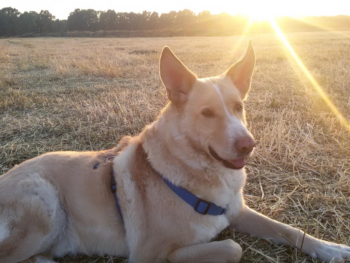 Asilo per cani Barking Dogs relax in riserva decima malafede roma sud