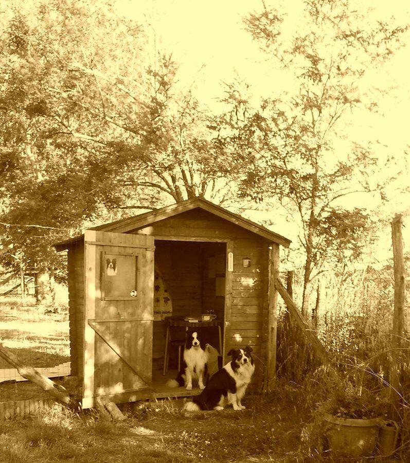 Open Day Barking Dogs Centro Cinofilo CSEn CONI Roma Sud