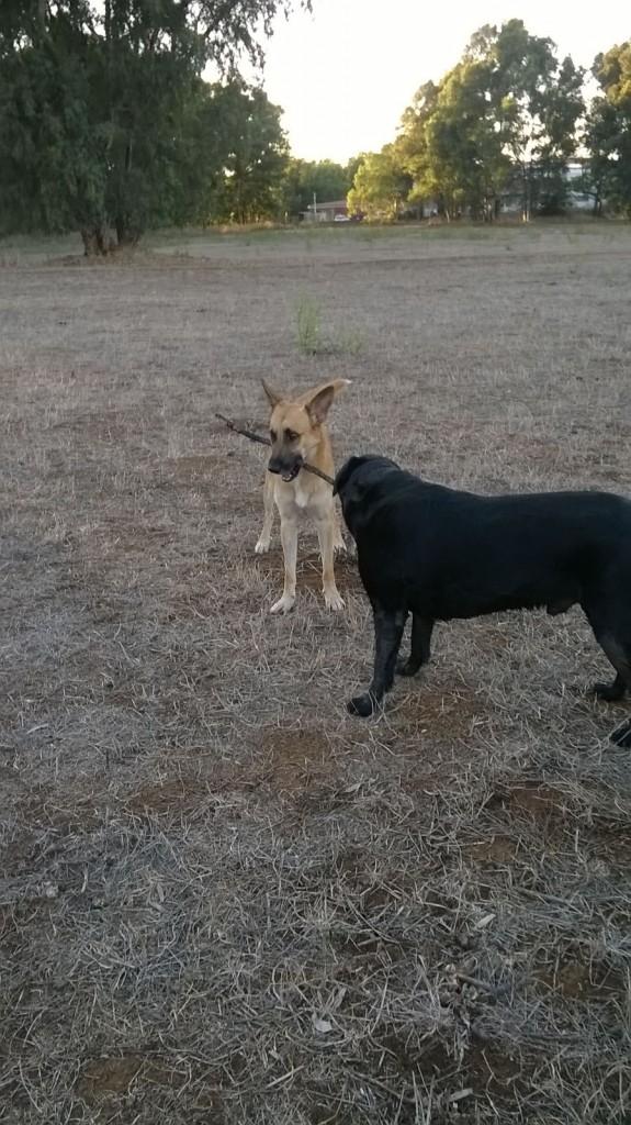 Asilo per cani Barking Dogs amici