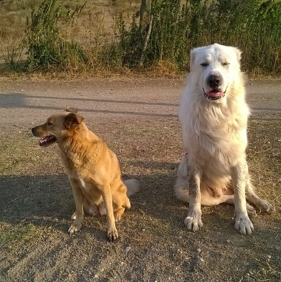 Intelligenza animale Barking Dogs Riserva Naturale Decima Malafede Roma Spinaceto