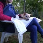 Barking Dogs Centro Cinofilo Roma E.U.R.