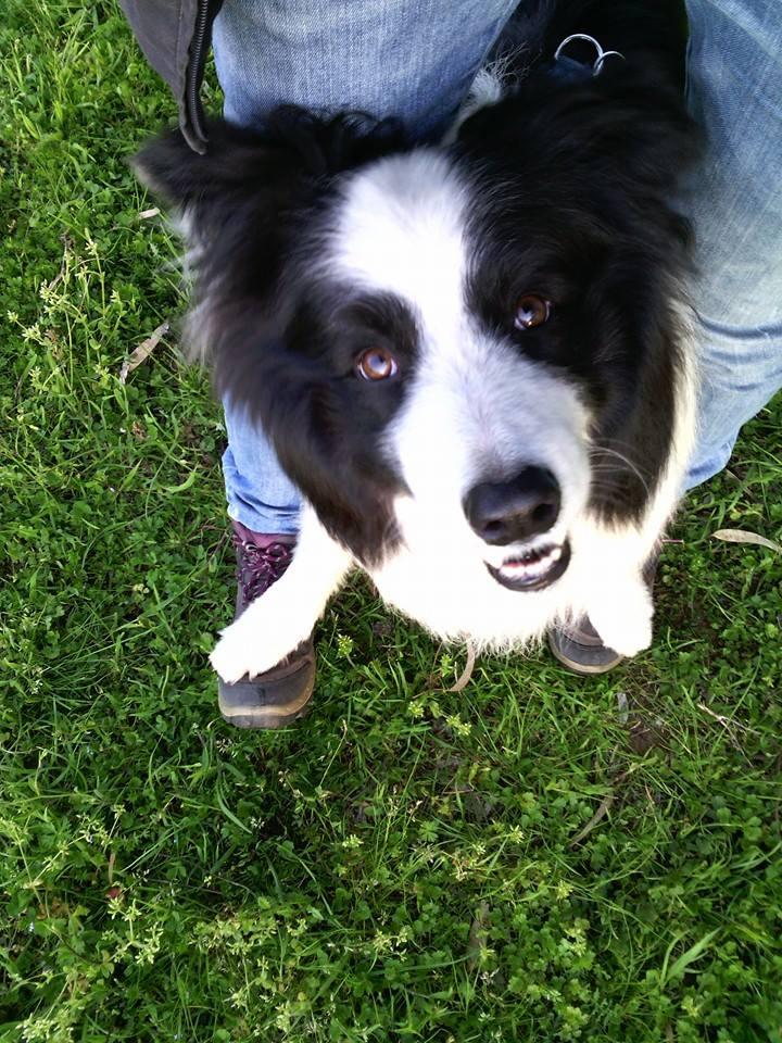 Educazione Cinofila Sistemi Positivi Roma Barking Dogs