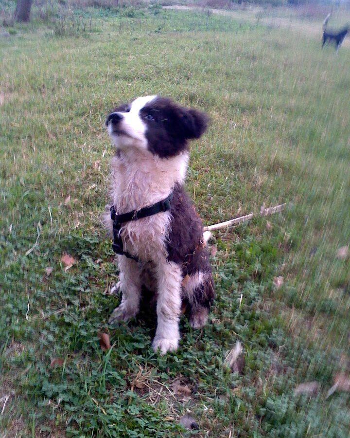 Cuccioli all'arrembaggio - Workshop Barking Dogs
