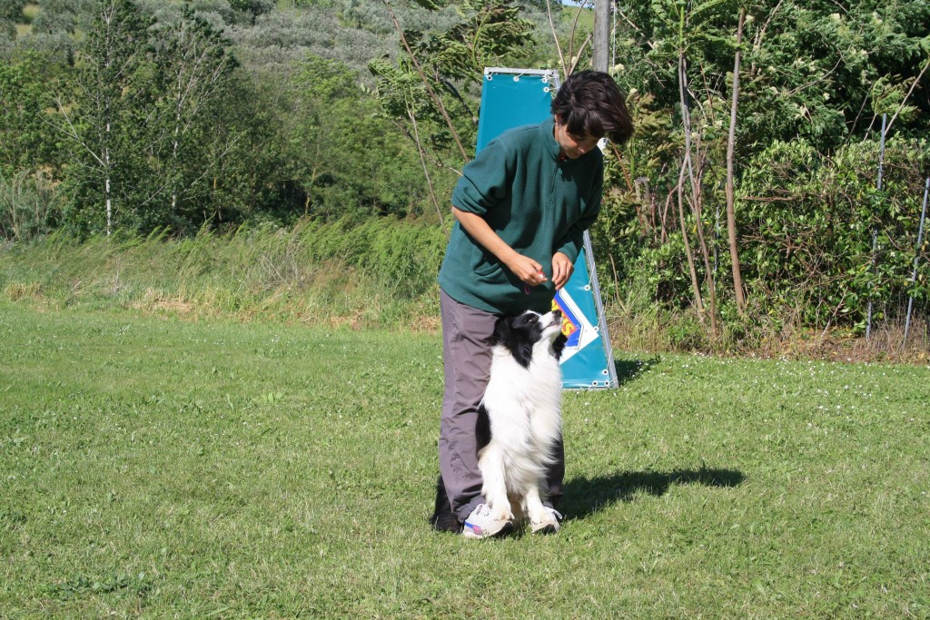 Barking Dogs Clicker Training Roma Spinaceto