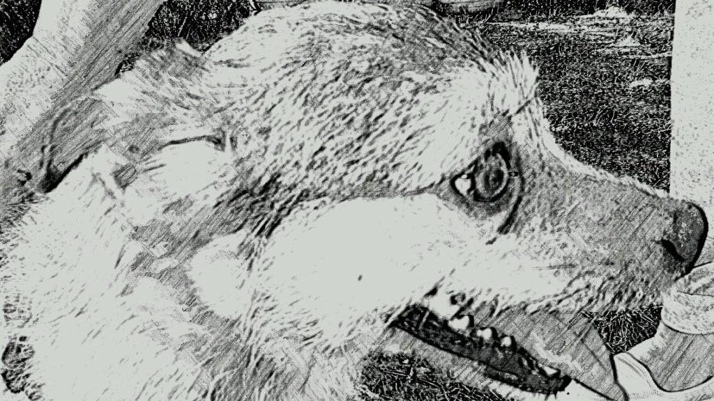 Siria Centro Cinofilo Barking Dogs Roma Sud