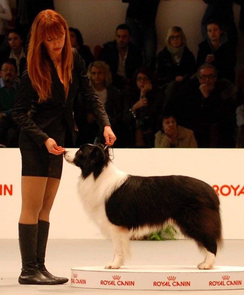 Sabrina Vitali con Incognito Border Collie Sun Border