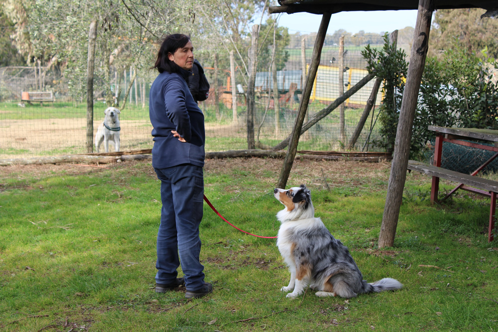 Comunicazione canina al Centro Cinofilo Barking Dogs
