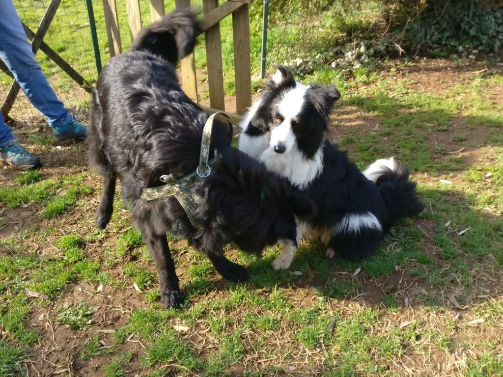 Complesso mondo dei cani: giornata sulla comunicazione