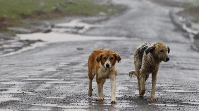 animalismo o egoismo?