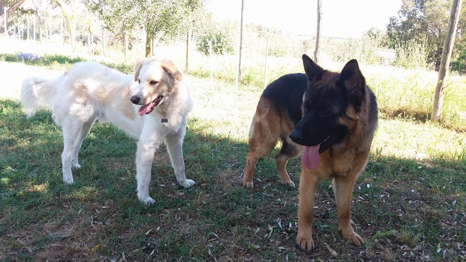 Tex e Rocky che trovano un amicizia poco scontata all'asilo diurno per cani Barking Dogs
