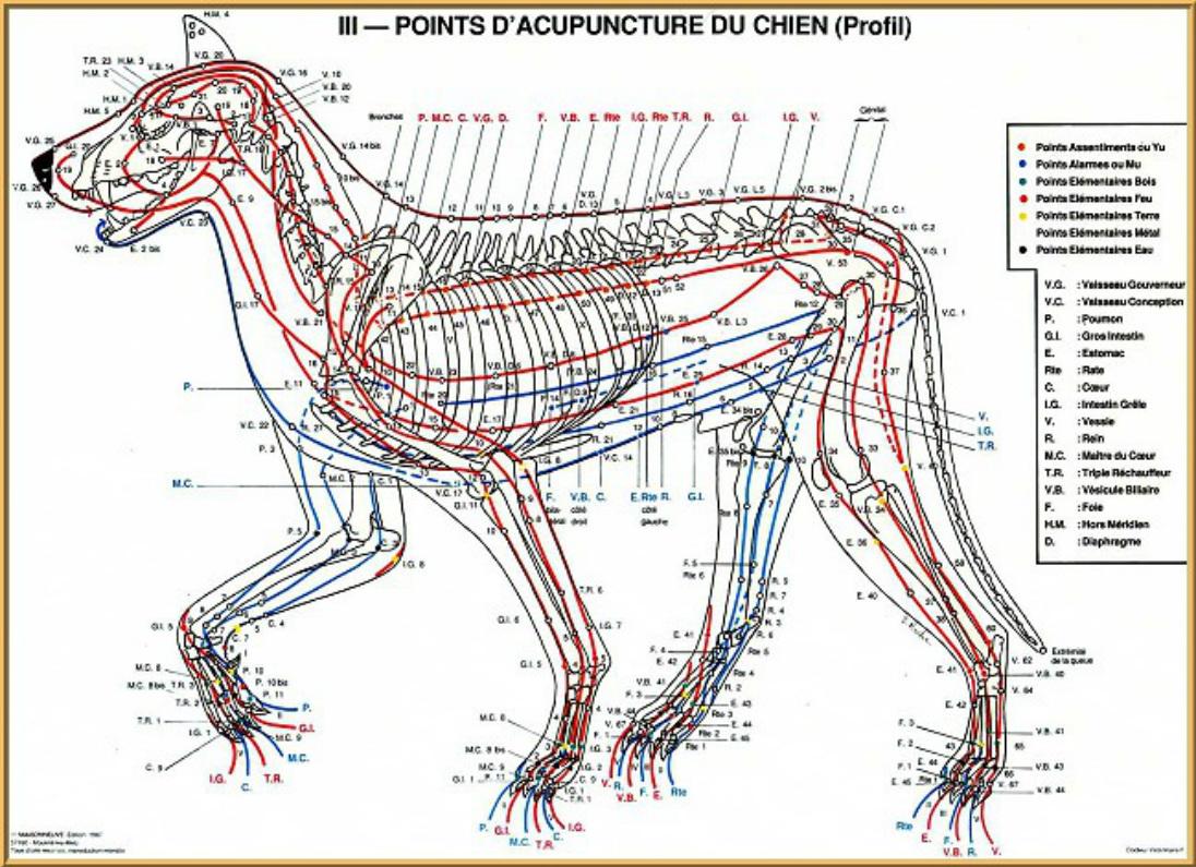 Agopuntura nel cane a cura di Andrea Rettagliati