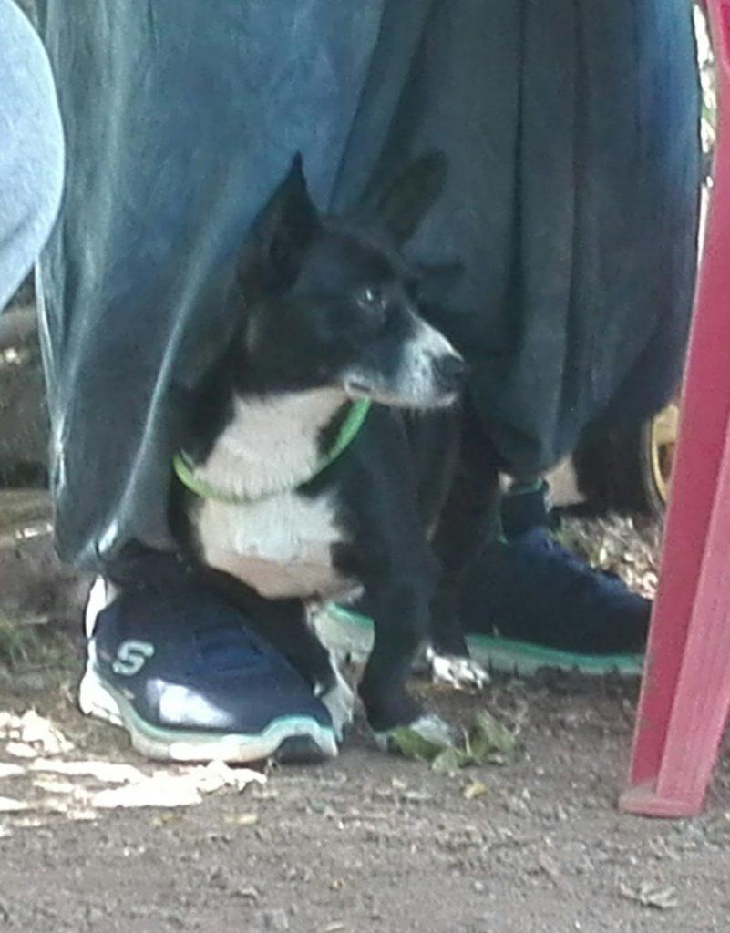 effetto del reiki sui cani nella comunicazione tra cani barking dogs centro cinofilo roma sud