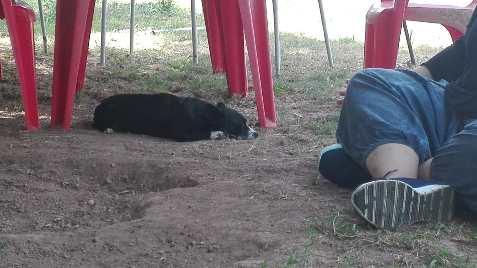 effetto del reiky sui cani Kareen Shiela Ottu