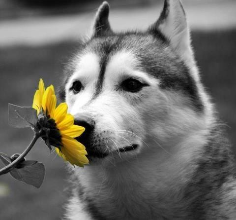 Fiori di Bach per cani Andrea Rettagliati per Barking Dogs