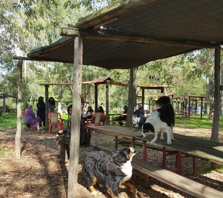 seminari guida pratica e facile al cane Barking Dogs Roma Sud