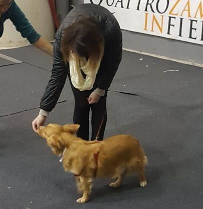 seminari guida pratica e facile al cane Barking Dogs Centro Cinofilo Roma Sud