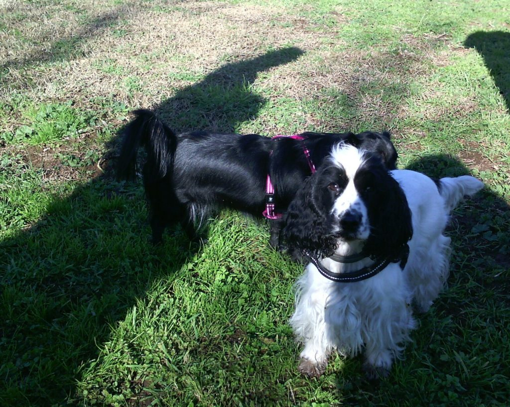 Guida pratica e facile al cane Barking Dogs Roma