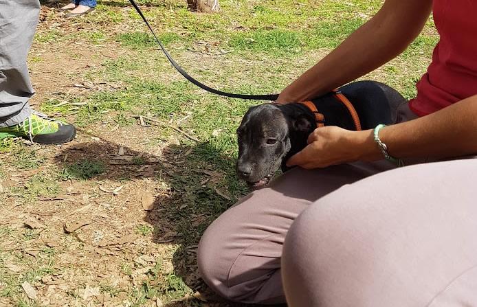 guida pratica e facile al cane Barking Dogs Centro Cinofilo Roma Sud E.U.R. Spinaceto