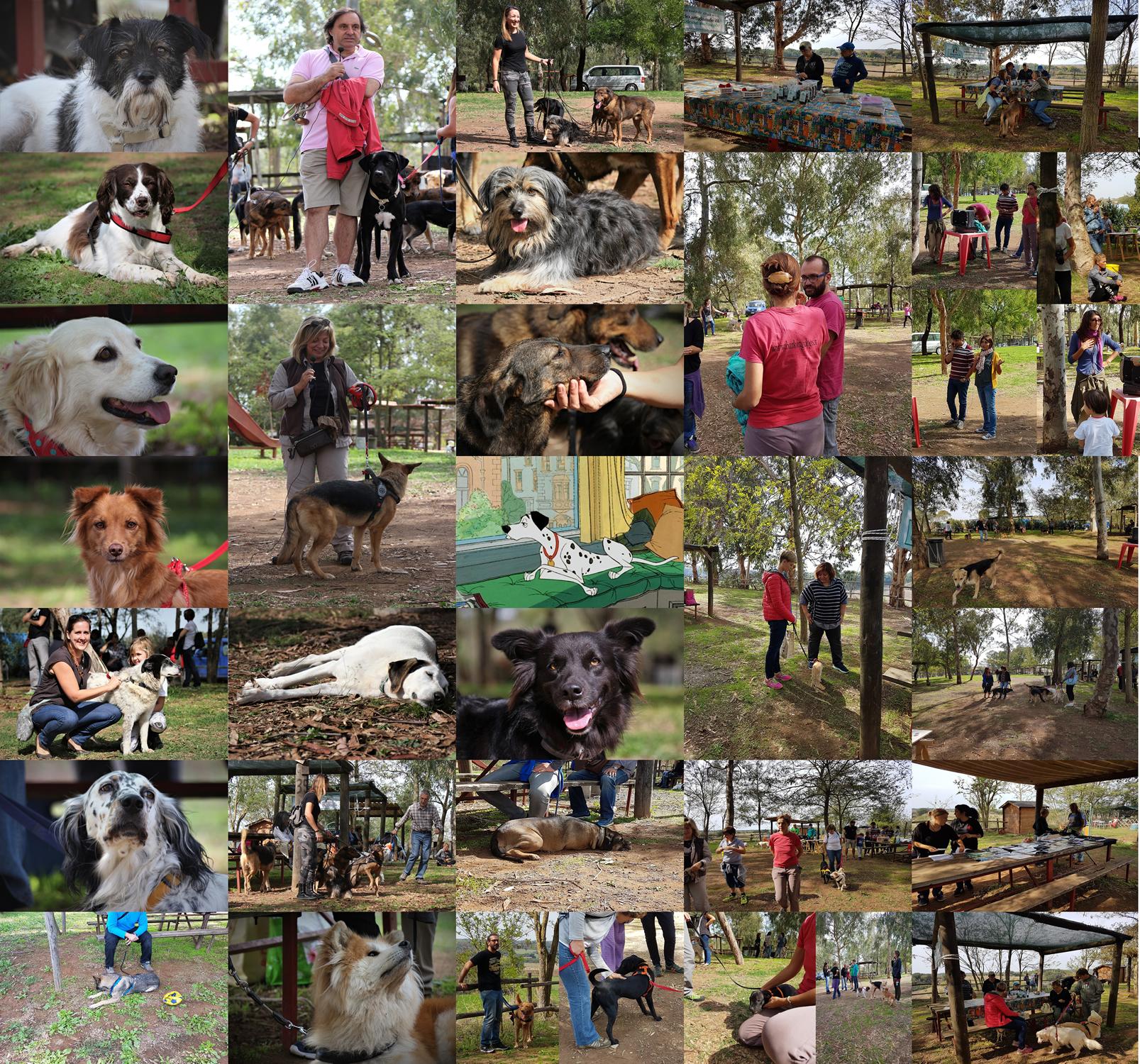 solidarietà per la diffusione sul territorio del concetto di benessere animale Barking Dogs Centro Cinofilo Roma Sud