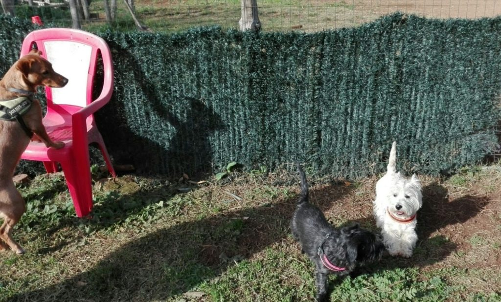 classi di comunicazione cani Barking Dogs Centro Cinofilo Roma Sud