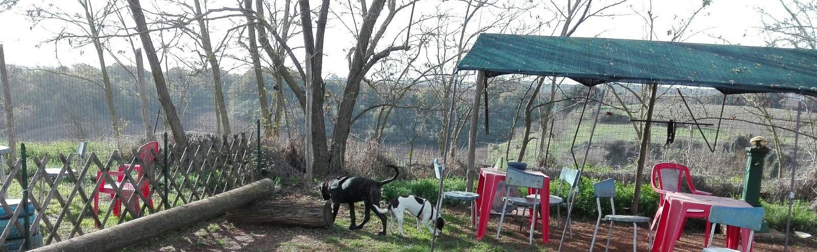 classi di comunicazione e socializzazione Barking Dogs Centro Cinofilo Roma Sud