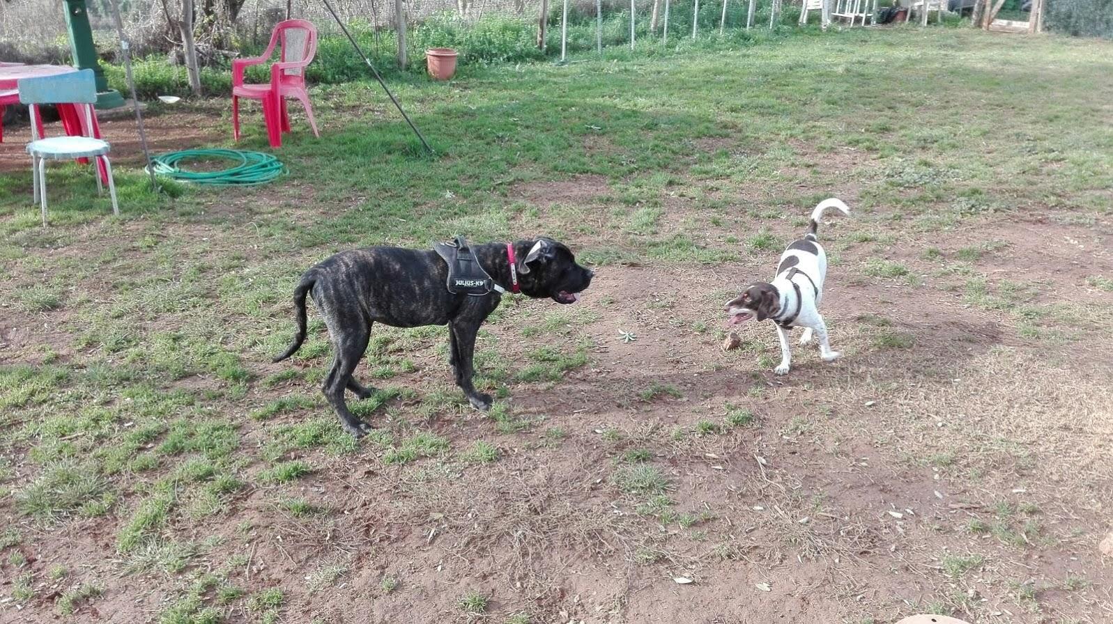 classi di socializzazione Barking Dogs Centro Cinofilo Roma Sud Spinaceto