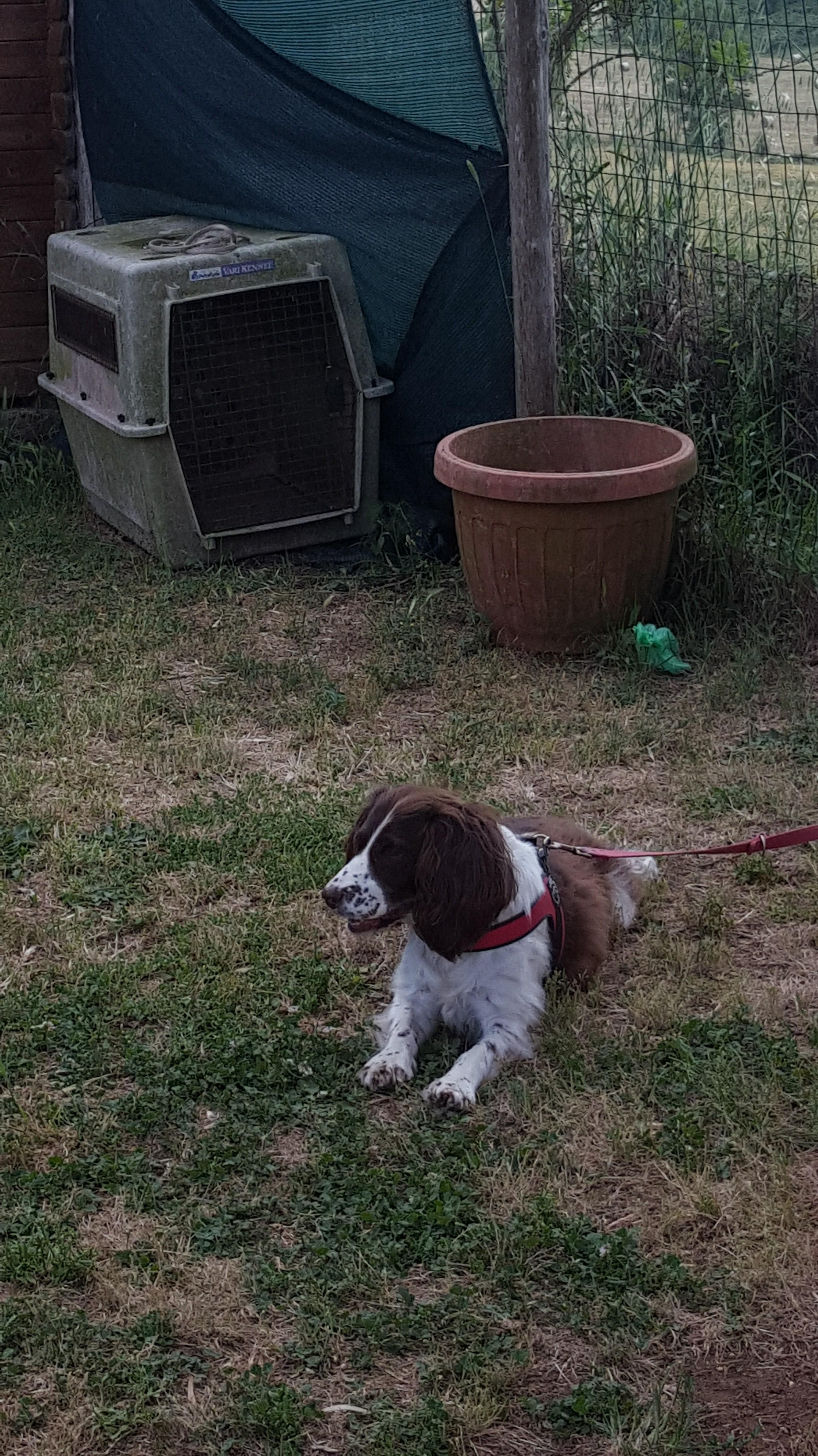 Nanà e l'asilo per cani Barking Dogs Roma Sud