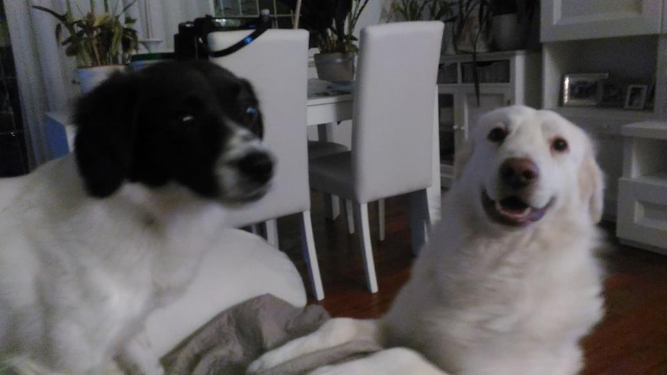Mia e il percorso per farsi capire Centro Cinofilo Barking Dogs Roma Sud