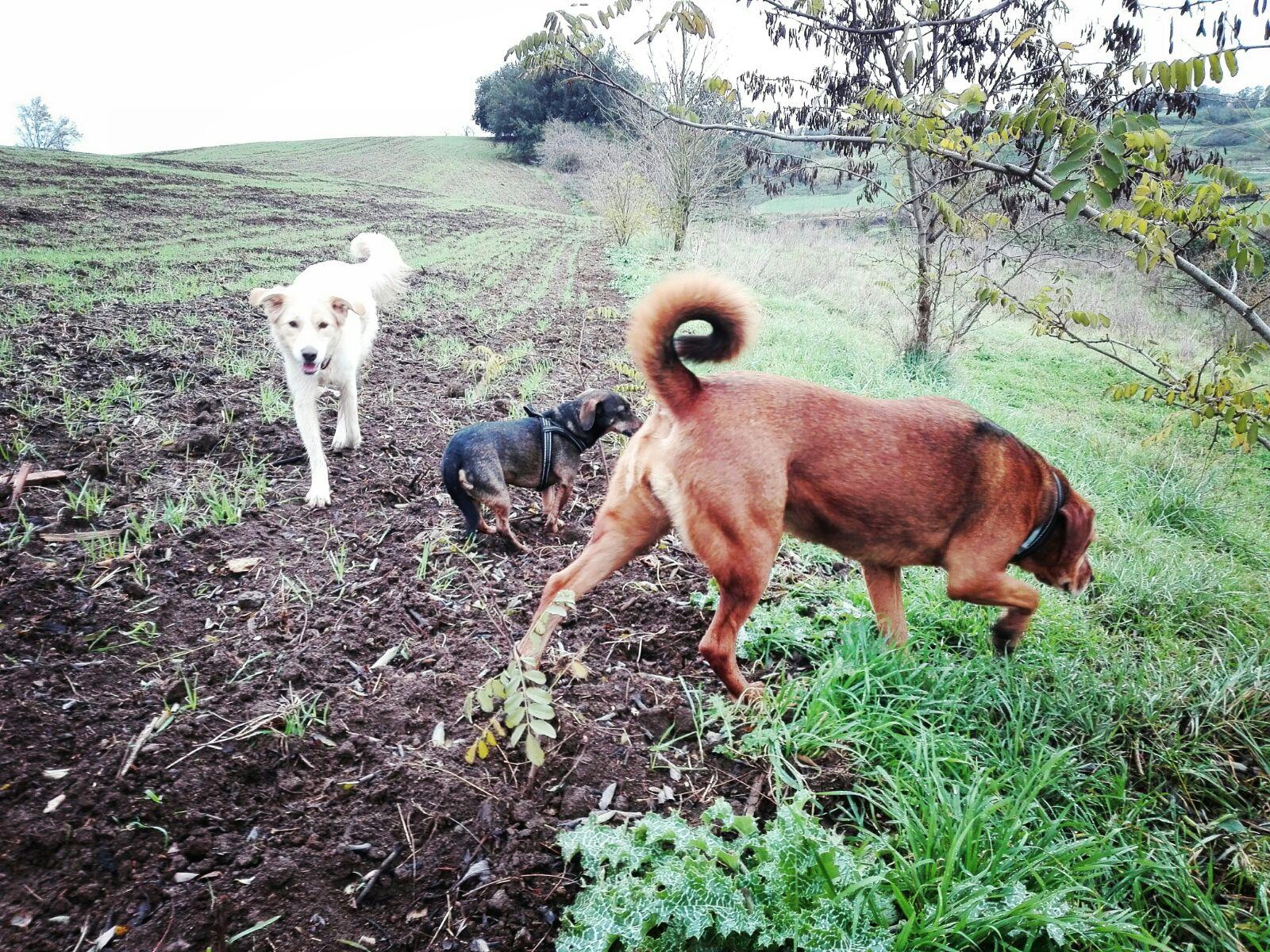ricerca olfattiva Barking Dogs Centro Cinofilo Roma Sud Spinaceto