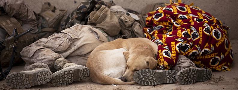 Cani con difficoltà workshop con Angela Clark – Stockdale e Kareen Sheila Ottu Roma Centro Cinofilo Barking Dogs