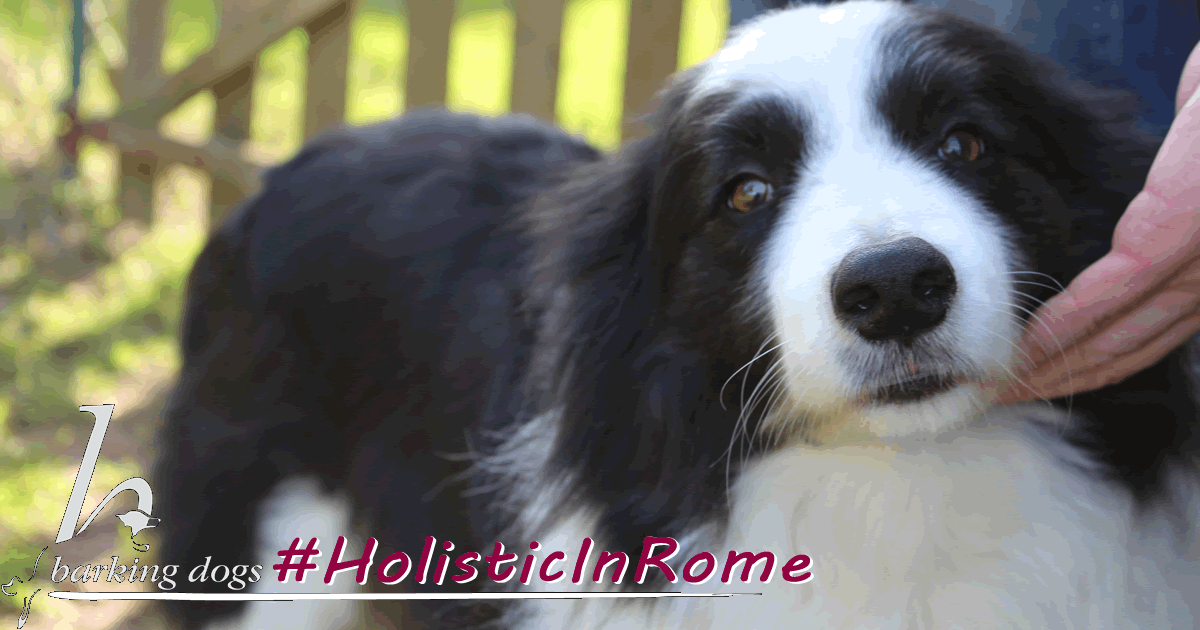 #HolisticInRome centro cinofilo roma sud barking dogs