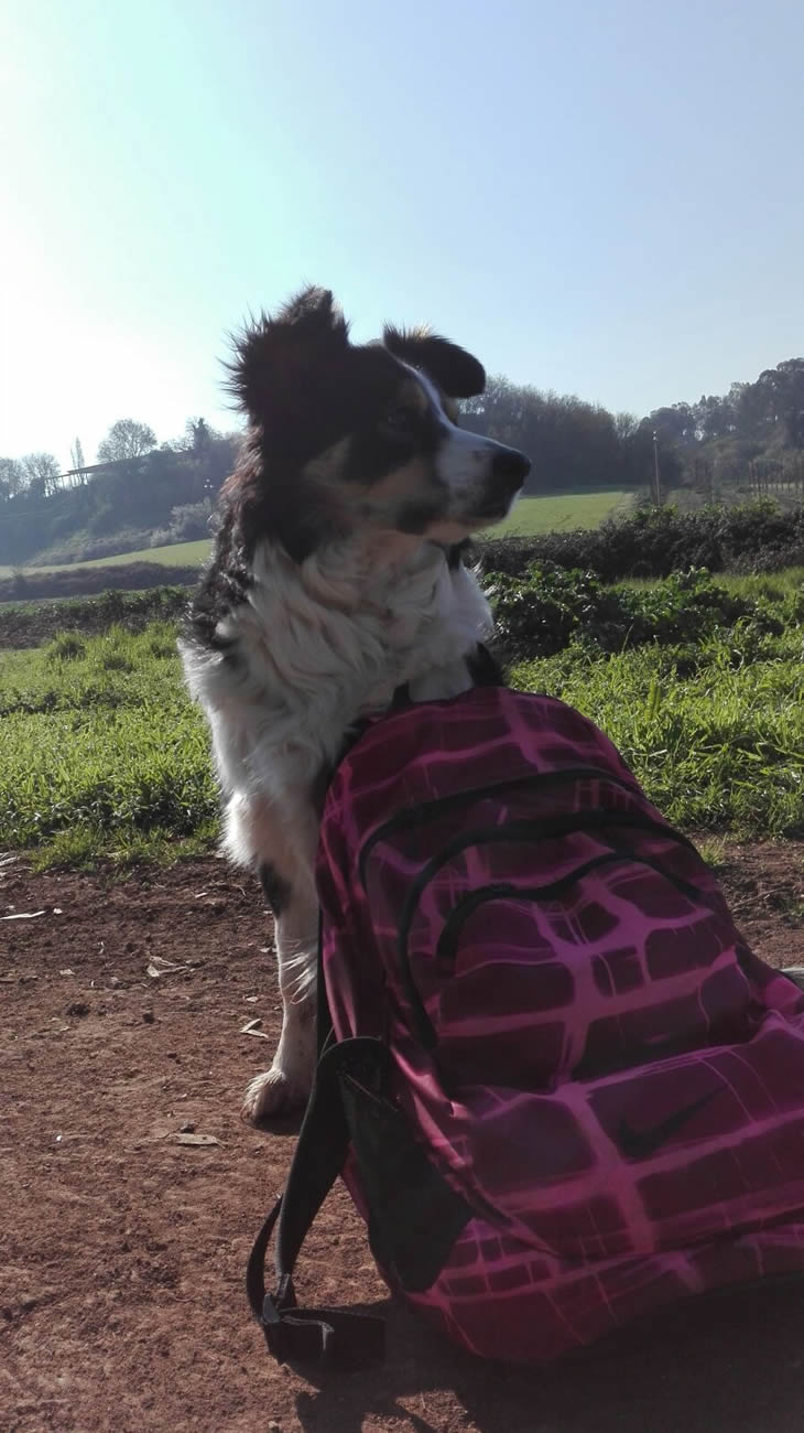 tirocinio al centro cinofilo roma sud barking dogs con Francesca Trani