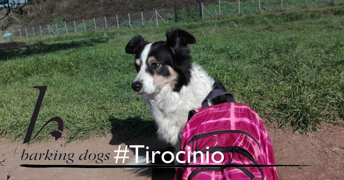tirocinio al centro cinofilo roma E.U.R. Barking Dogs con Francesca Trani