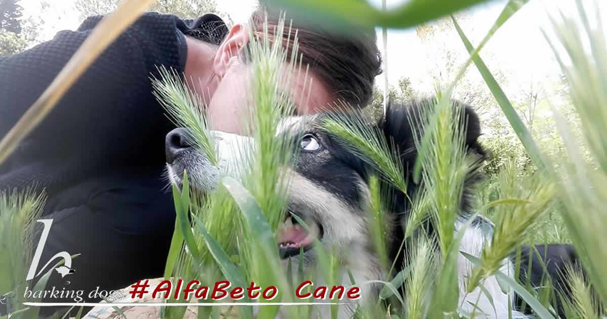 #AlfaBeto Cane due giorni per capire cosa osservare e come