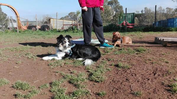 gruppi di comunicazione Monica e Gipsy con l'empatia hanno imparato a comunicare al Centro Cinofilo Roma Sud Barking Dogs