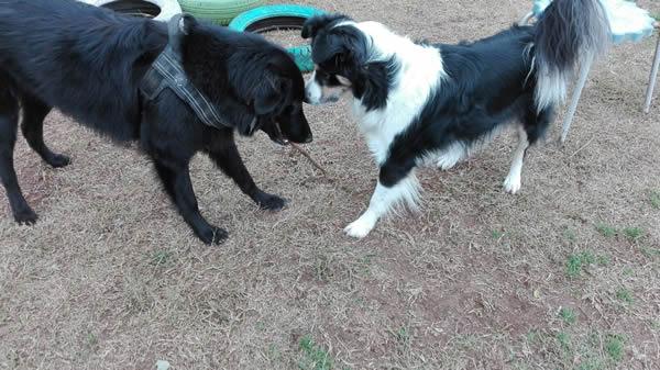 Gioia ai corsi di educazione cinofila a roma sud Barking Dogs