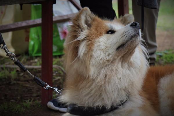 nosework approfondito ricerca olfattiva con cani a roma sud