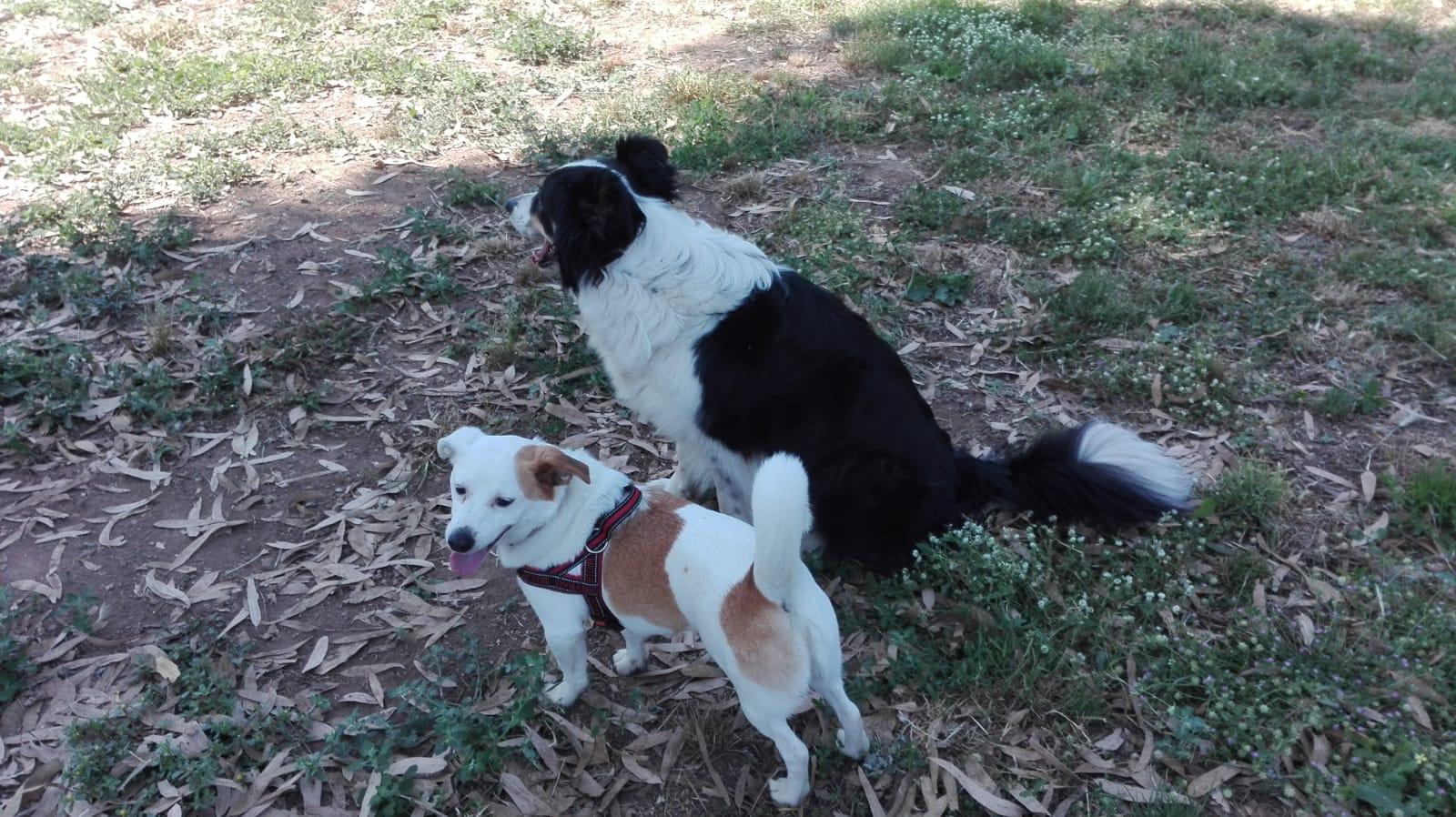 Arno e Birillo classi di comunicazione tra cani centro cinofilo roma sud