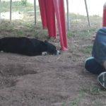 l'effetto del Reiki sui cani #HolisticInRome al Barking Dogs con Kareen Shiela Ottu