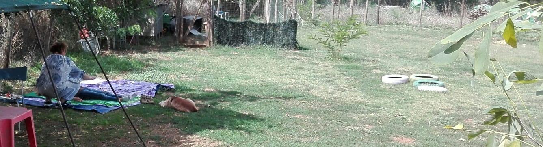 Trattamenti Reiki su cani e proprietari Centro Cinofilo Barking Dogs Roma Sud
