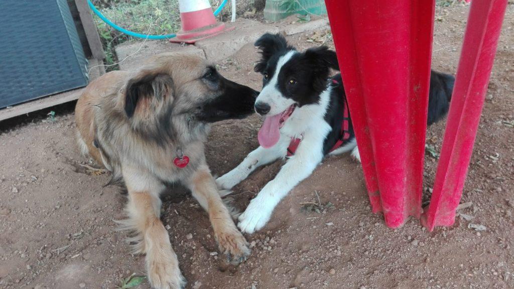 gruppo comunicazione cani Centro Cinofilo Roma Sud