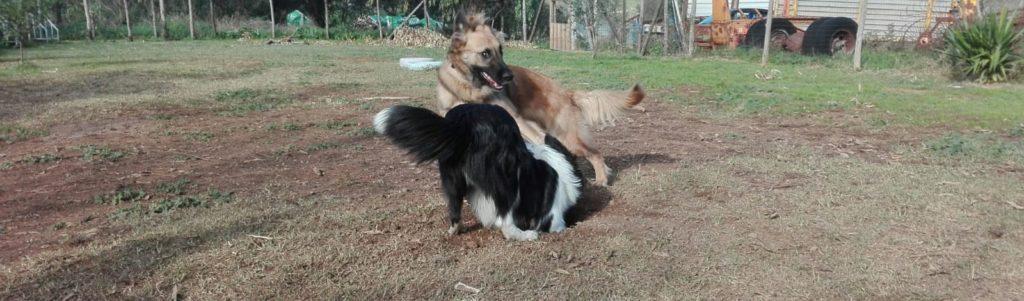 Comunicazione cinofila kira & etna Barking Dogs Centro Cinofilo Roma Sud