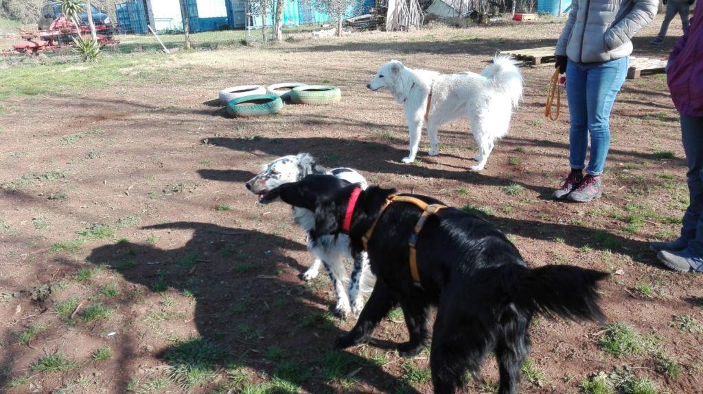 comunicazione del cane con gli altri cani e i proprietari