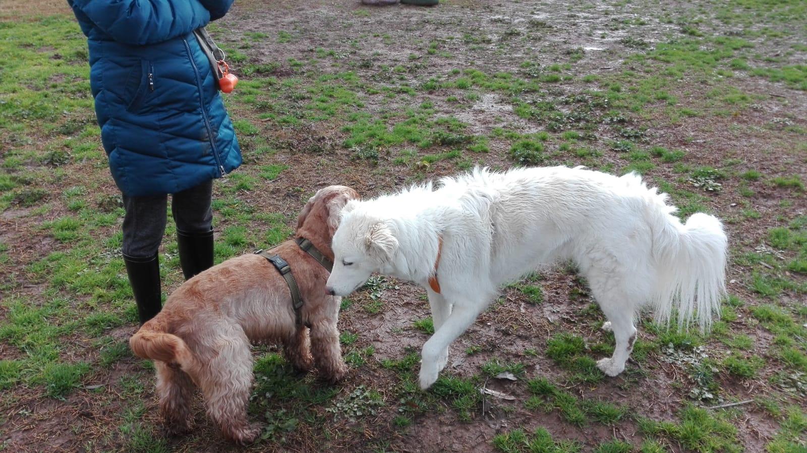 gruppi di comunicazione per cani centro cinofilo roma sud