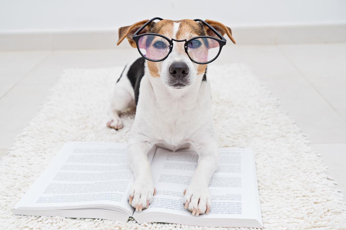 Doggy sito di incontri UK migliori siti di incontri gratuiti Blog