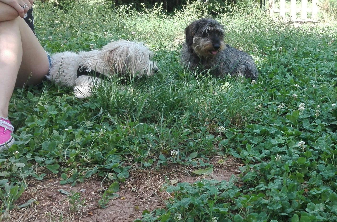gruppi di comunicazione per cani adulti centro cinofilo roma sud