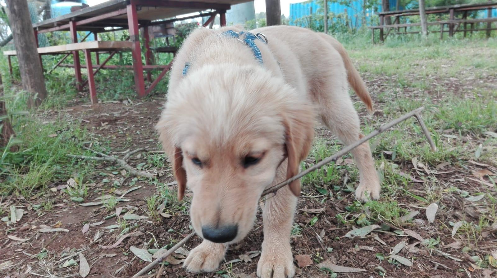 gruppi di comunicazione per cuccioli centro cinofilo roma sud