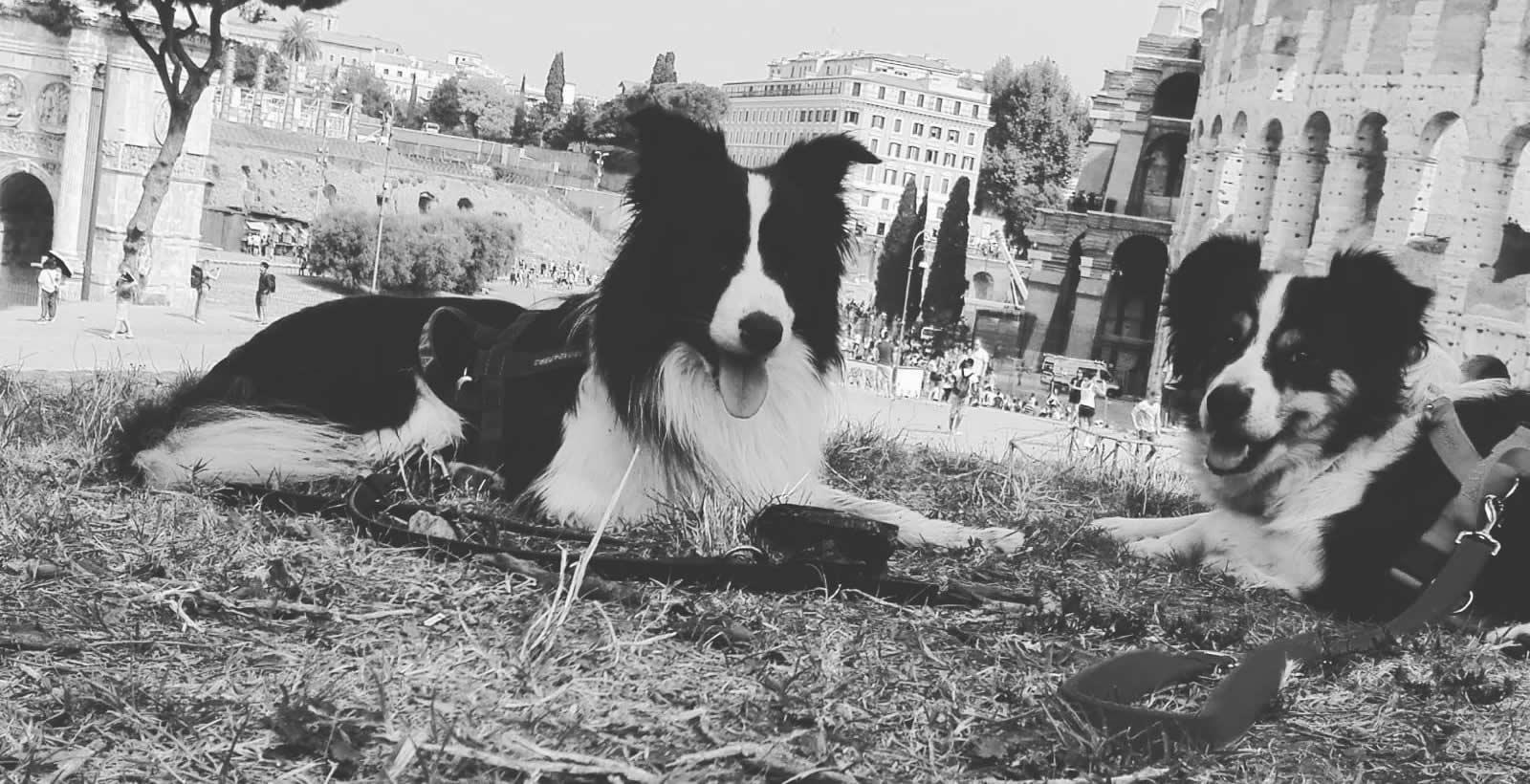 doggy translator ti traduco il cane centro cinofilo roma