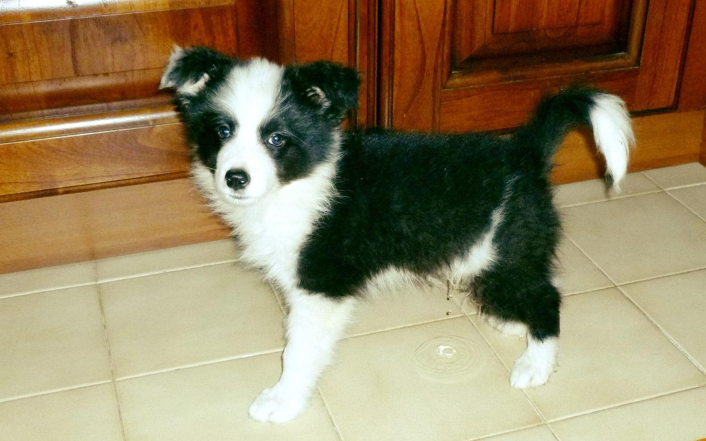 cucciolo benvenuto a casa meeting in streaming Centro Cinofilo Barkin Dogs