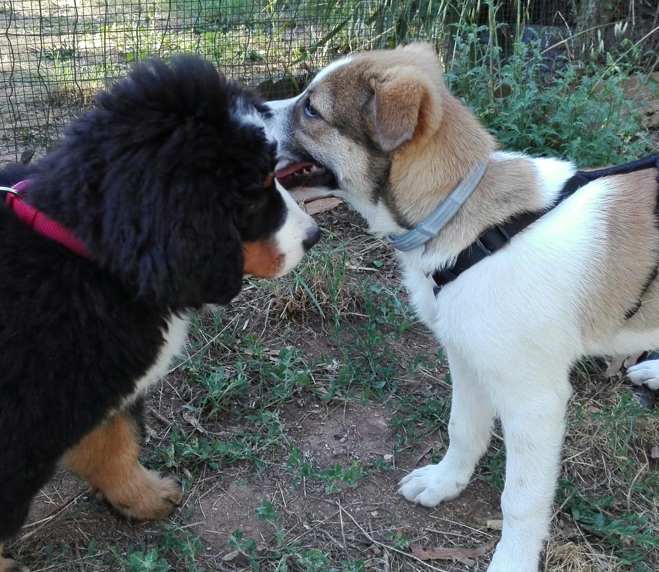 puppy class perché no educatore cinofilo roma sud